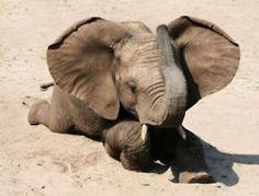 ❥ Baby elephant