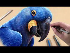 Pencil Painting, Pencil Art, Pencil Drawings, Pastel Pencils, Chalk Pastels, Pastel Art, Beautiful Birds, Cartoon Art, Pretty