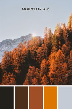 Using muted colors as a background sets the perfect backsplash for your logo to pop. #color #colour #colorpalette #palette #fall #fallcolors #autumn #autumncolors #fallleaves #leaves #leaf #scenic #outside #outdoor #witch #lookadesign Trendy Colors, Muted Colors, Autumn Colours, Warm Autumn, Autumn Leaves, Diy Clay Earrings, Fall Color Palette, Color Pallets, Pantone Color