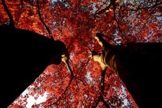 Inside the magic red maple tree. (by grace*c*)