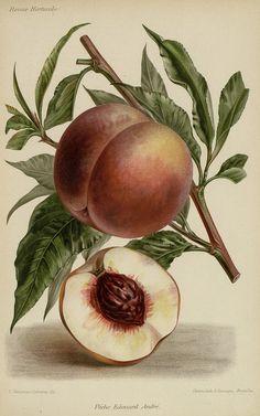 http://bibliotheque-numerique.hortalia.org/items/viewer/2024?ui=embed