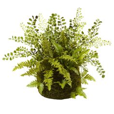 Features:  -Deep green mixed fern and twig.  -Natural looking moss basket.  -Requires no water or sun.  Product Type: -Floral Arrangements.  Color: -Green.  Size: -Medium.  Flower: -Fern.  Container F