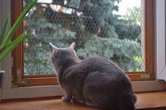 Masz kota, osiatkuj okna i balkon!