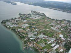 """* Lago Bodensee (Lago Constance) *  """"Ilha de Reichenau"""". Konstanz, Alemanha."""