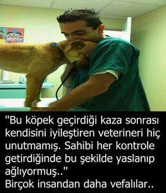 "#hayvanlardan #canavarlar #renmesi #gereken #hayatta #vefay #grnml #nsan #var #buVefayı hayvanlardan öğrenmesi gereken ""İnsan görünümlü canavarlar"" var bu hayatta..! Beautiful Words, Animals Beautiful, Muslim Pray, Cant Stop Loving You, Best Caps, Good Sentences, Interesting Information, Boxer Dogs, Cool Words"