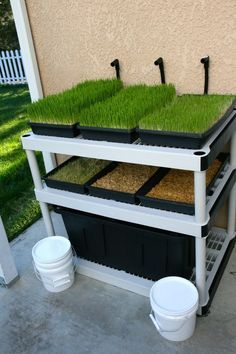 Barley Fodder Machine - photo only with a sales pitch, but this looks doable. Keeping Chickens, Raising Chickens, Raising Mealworms, Backyard Farming, Chickens Backyard, Fodder System, Design Jardin, Mini Farm, Pet Chickens