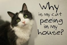 How to Stop Your Cat from Peeing in the House | PetHelpful