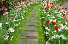 camino en el jardín con tulipanes