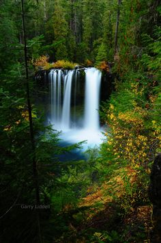 Koosah Falls, McKenzie River, Oregon