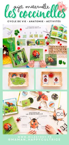 Activities on ladybugs in kindergarten with life cycle maps at tel . Kids Learning Activities, Educational Activities, Space And Astronomy, Special Education Teacher, Edd, Life Cycles, Lady Bug, Science And Nature, Pre School