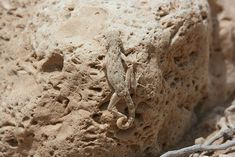 Image detail for -animal photography- Lizard Camouflage Camouflage, Wildlife Photography, Animal Photography, Curious Creatures, Wild Creatures, Shades Of Beige, Baboon, Reptiles And Amphibians, Nature Images