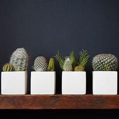 Cactus in identical containers