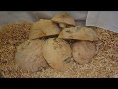 Woodturning Bowls blanks Explained - YouTube