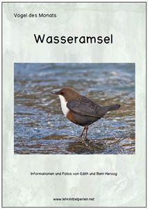 Vogel das Monats: die Wasseramsel