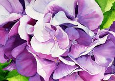 Sunlit Hydrangea Painting by Janis Grau - Sunlit Hydrangea Fine Art Prints and Posters for Sale