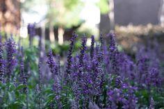 Detalles de este jardín polinizador Gardens, Diversity, Nature, Shrubs, Landscaping, Plants, Flowers