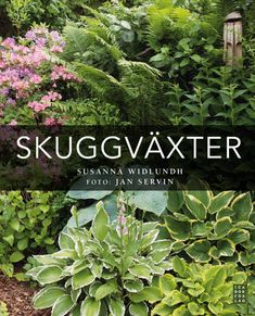 Skuggväxter by Jan Servin - issuu Patio Garden, Plants, Fairy Garden, Dream Garden, Garden Inspiration, Modern Garden, Shade Plants, Garden Landscaping, Garden Plants