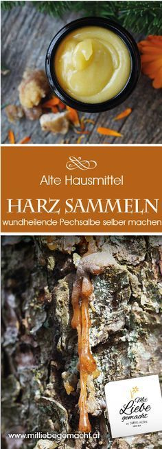 The luck called pitch from the forest - resin ointment for wound healing .- Das Glück namens Pech aus dem Wald – Harzsalbe zur Wundheilung Collect tree resin properly to produce the pitch ointment or resin ointment. Cold Home Remedies, Natural Health Remedies, Natural Cures, Natural Healing, Herbal Remedies, Natural Foods, Natural Products, Natural Beauty, Natural Life