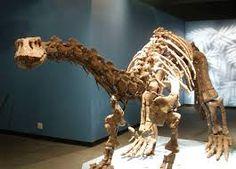 Image result for lufengosaurus