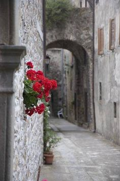 I can smell the wine and marinara now. . . can't you?  Tuscany