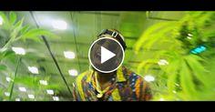 B.o.B  Tweakin  feat.  London Jae  Young Dro