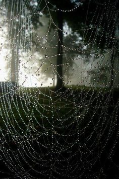 Image result for dawn-spun spider silk shimmering with milky light fleeting enchantment