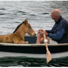 Some people won't go anywhere without their dog.  Others, however....