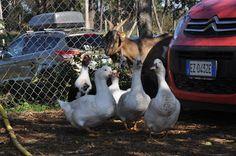 Le cronache animali: Evento - Una giornata a Thegreenplace. Ecco come p...