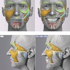 Exceptional Drawing The Human Figure Ideas. Staggering Drawing The Human Figure Ideas. Anatomy Head, Facial Anatomy, Anatomy Poses, Body Anatomy, Anatomy Drawing, Anatomy Art, Anatomy Of The Face, Anatomy Study, Anatomy Reference