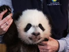 First look at baby Bei Bei ~ YouTube ~ oh I would love to pick him up & just cuddle him♥