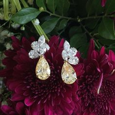 While up in the air, love looking at this spectacular @kamyenjewellery perfectly matched fancy yellow pear shaped earrings, classic and tres chic look! What is better than diamonds and flowers? #Pearfect #YellowLovin #YellowDiamond #Pearshaped #Brilliance #Scintillation #Sparkle #Fire #KamyenJewellery #YourDailyDoseOfSparkle #ChampagneGem #ClassicKamyen #ChampagneGem200KSpecialEdition