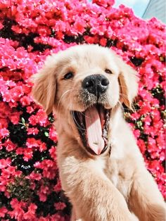 For today's Feel Good Friday theme I am sharing dogs with flowers to show just how wonderful those rainy April days can eventually be! Super Cute Puppies, Cute Baby Dogs, Cute Little Puppies, Cute Dogs And Puppies, Cute Little Animals, Cute Funny Animals, Doggies, Cute Pups, Cute Puppy Pictures