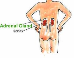 Adrenal Fatigue explained well.
