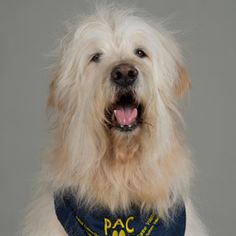 Meet Charley - UCLA PAC Volunteer. His greatest accomplishment is getting a response form a patient who had been catatonic for a week. The patient opened her eyes for the very first time since being hospitalized.