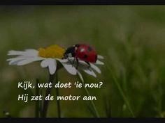 Kleuteridee » Insecten & kriebelbeestjes