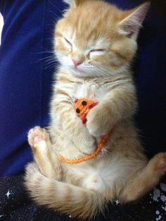❤️Sweet Kittens