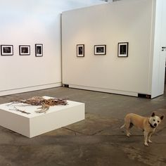 James Guppy's MUDWORKS. On view until 25 May. #photography #exhibition