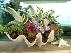 Giant clam shell planter...I want this.