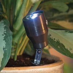 Auto Plant Spotlight
