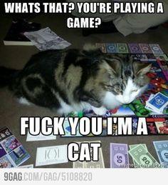 So my cat.