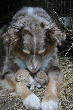 Cross-species maternal love. Never fails to amaze me.