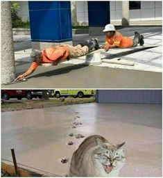 Memes funny lol humor hilarious 62 New Ideas Funny Meme Pictures, Funny Cat Memes, Funny Relatable Memes, Funny Images, Funny Humor, Funny Sayings, Memes Humor, Hilarious Jokes, Cats Humor