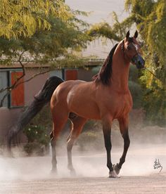 Just gorgeous! And that butt would put some QH's to shame!