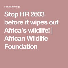 Stop HR 2603 before it wipes out Africa's wildlife! Endangered Plants, Endangered Species, Report Animal Abuse, Rare Species, Wipe Out, Create Awareness, Life Form, Wildlife Conservation