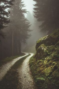 misty forest road | nature photography #adventure