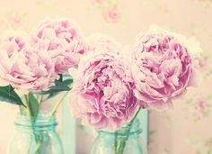 Peonies ~ Explored~ Front Page by lucia and mapp, via Flickr