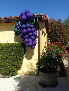 Grape balloon decoration @ Paso Robles, CA Italian Themed Parties, Italian Party, Ceiling Decor, Balloon Decorations, 30th Birthday, Holidays And Events, Grape Vines, Party Planning, Party Themes