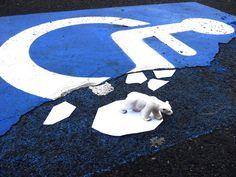 OakOak, du street art insolite français  design bonus