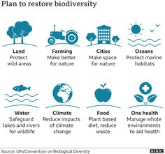 Biodiversity: Why the nature crisis matters, in five graphics - BBC News Earth Summit, Convention On Biological Diversity, Path Of Destruction, Paris Climate, City Farm, History Images, First Health, Environmental Education, Plant Species