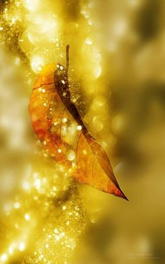 sunflowersandsearchinghearts: Exquisite Leaf via pinterest Nature's first green is gold,Her hardest hue to hold.Her early leaf's a flower;But only so an hour.Then leaf subsides to leaf.So Eden sank to grief,So dawn goes down to day.Nothing gold can stay. ~Robert Frost